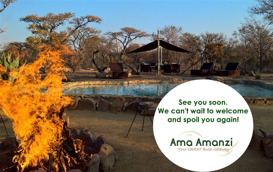 How does Ama Amanzi Bush Lodge deal with COVID-19?